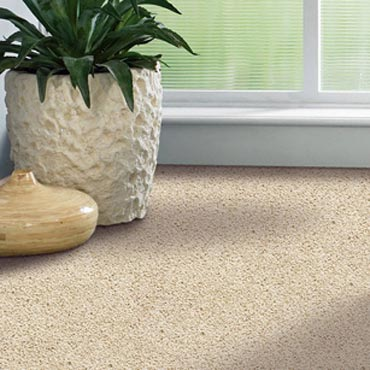 Shaw Carpet Bellera Collection | Pottsboro, TX